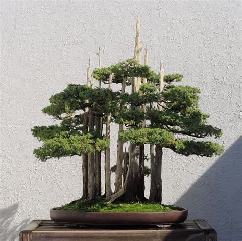 This Bonsai Master's Greatest Work of Art is a Loving