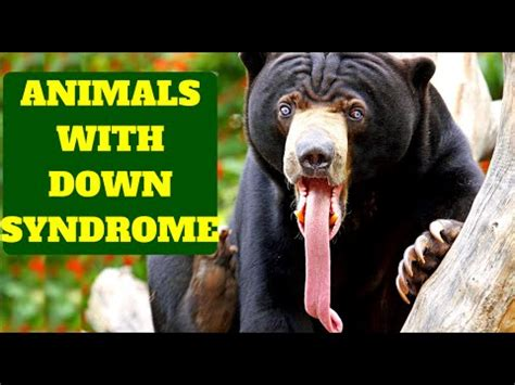 AMAZING ANIMALS WITH DOWN SYNDROME - YouTube