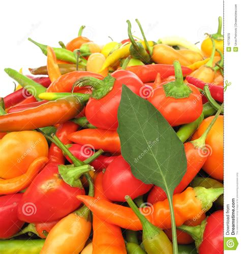 Chili Peppers Paprika Full Frame Stock Photo - Image: 10775870