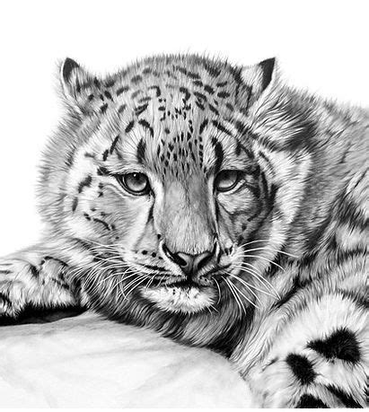Browse through a collection of wildlife paintings and