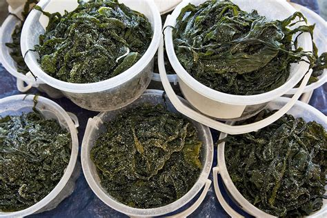 Fucoxanthin — What You Need to Know About this Seaweed
